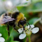 saving bees