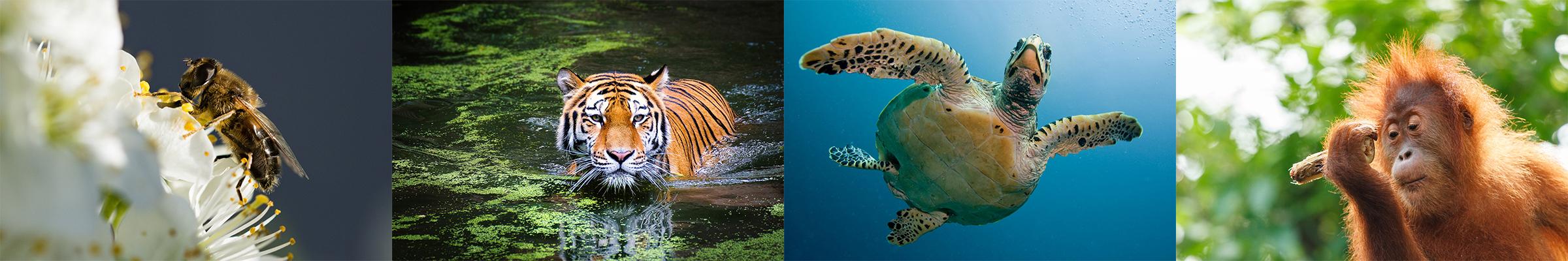 protect wildlife